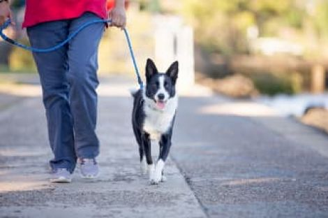 Person walking a dog on a leash