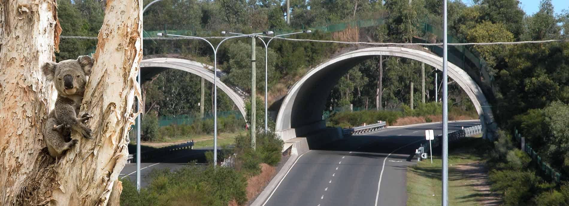 compton road wildlife corridor