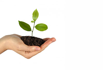 hand with plant in soil