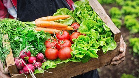 Vegetables_480_270