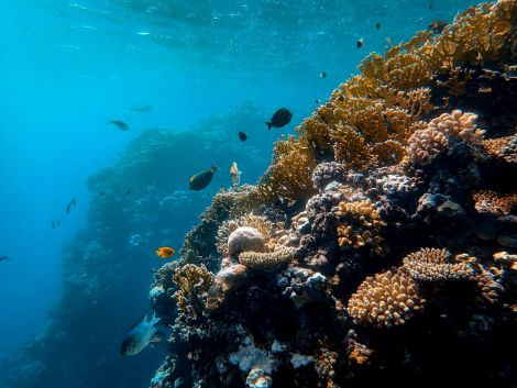 Fish beside coral