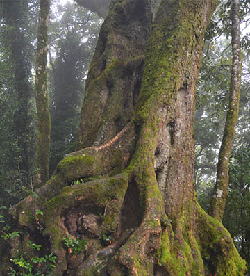 The Best of All Lookout is home to an Ancient Antarctic Beech Forest.